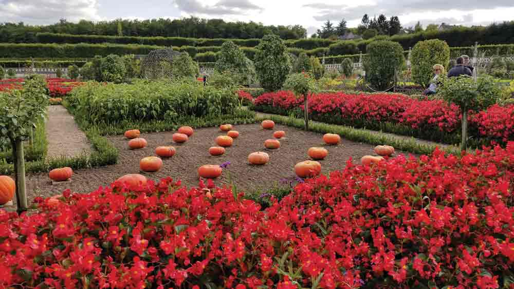 French-pumpkin-garden
