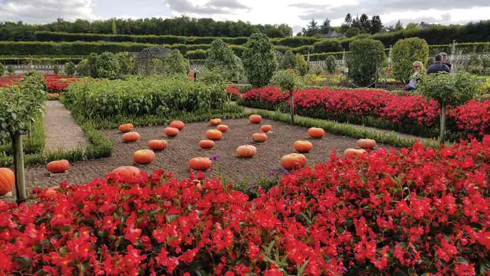 French-pumpkin-garden