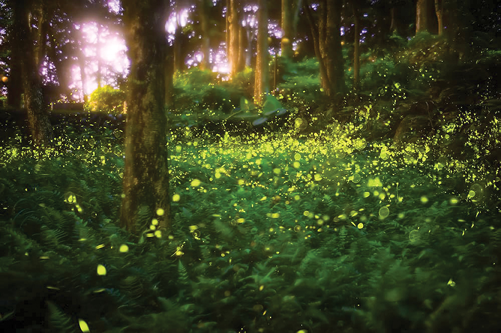 Elkmont-fireflies-shining-in-the-Great-Smoky-Mountains-WEB